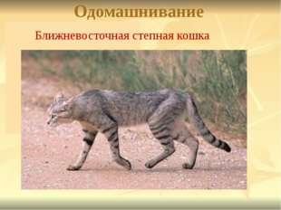Одомашнивание Ближневосточная степная кошка