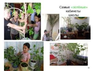 Самые «зелёные» кабинеты школы *