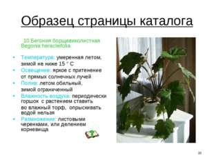 Образец страницы каталога 10.Бегония борщевиколистная Begonia heracleifolia Т