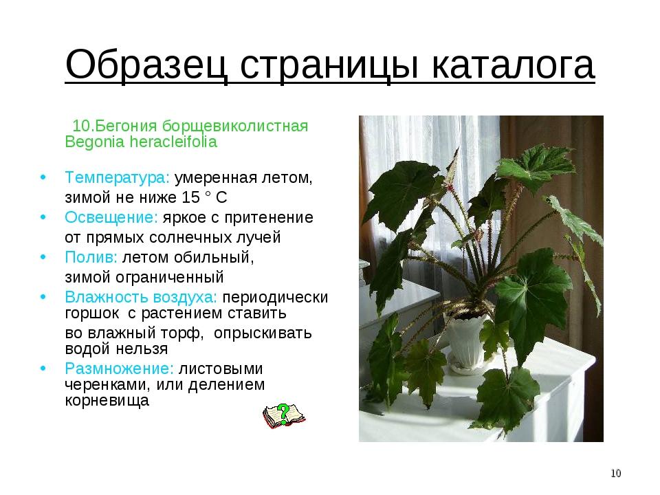 Образец страницы каталога 10.Бегония борщевиколистная Begonia heracleifolia Т...