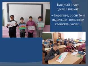 Каждый класс сделал плакат « Берегите, сосну!» и выделяли полезные свойства с