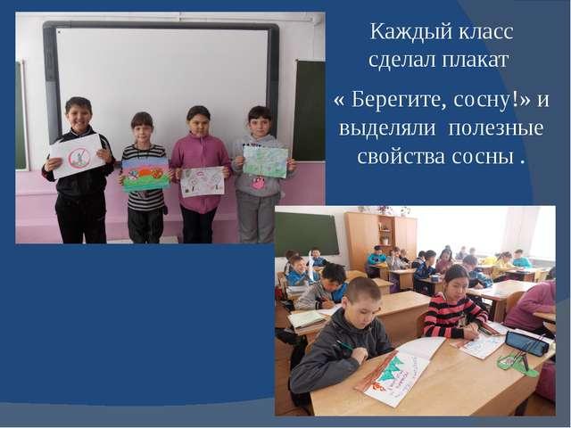 Каждый класс сделал плакат « Берегите, сосну!» и выделяли полезные свойства с...
