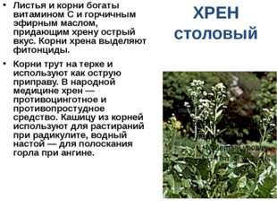 ХРЕН столовый Листья и корни богаты витамином С и горчичным эфирным маслом, п