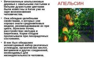 АПЕЛЬСИН Вечнозеленые апельсиновые деревья с овальными листьями и белыми души