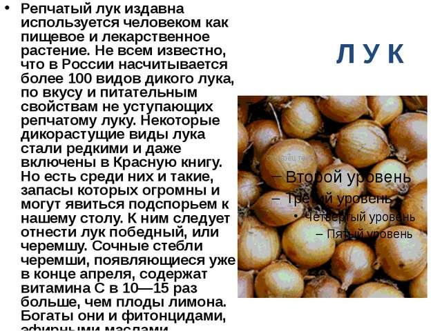 Л У К Репчатый лук издавна используется человеком как пищевое и лекарственное...