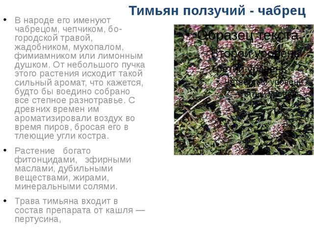 Тимьян ползучий - чабрец В народе его именуют чабрецом, чепчиком, богородско...