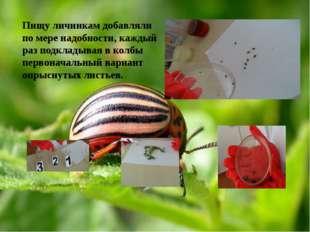 Пищу личинкам добавляли по мере надобности, каждый раз подкладывая в колбы п