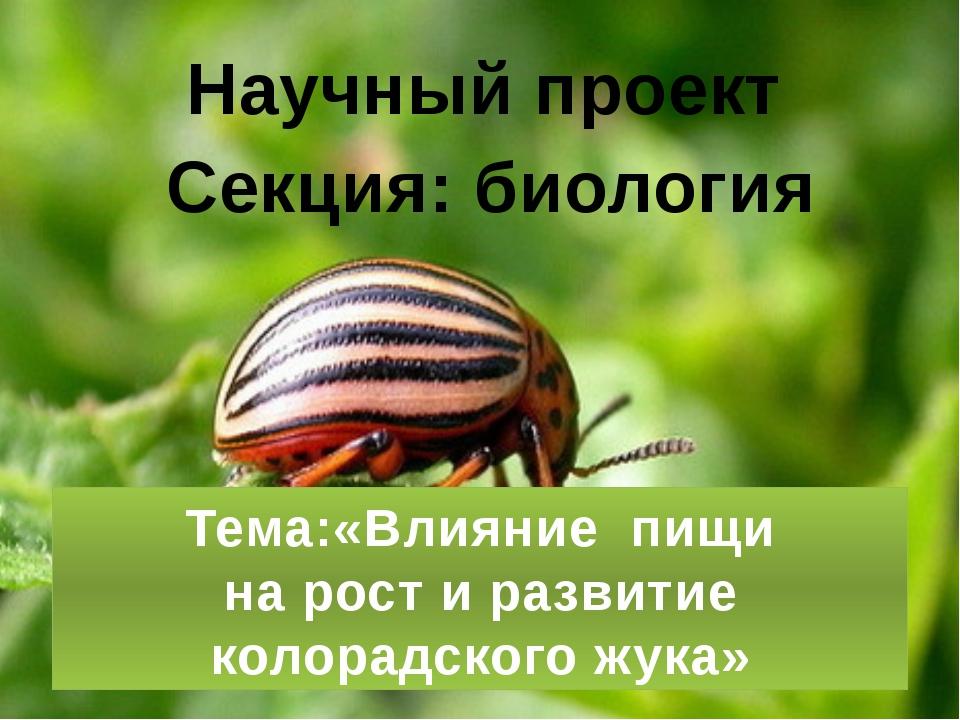 Тема:«Влияние пищи на рост и развитие колорадского жука» Научный проект Секц...