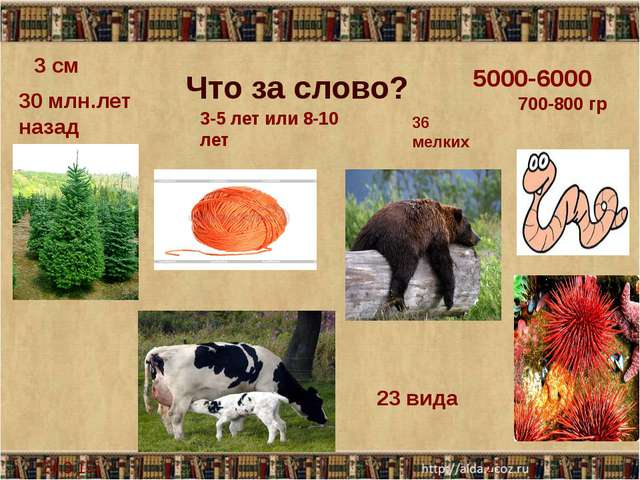 Что за слово? 30 млн.лет назад 5000-6000 700-800 гр 3 см 3-5 лет или 8-10 ле...