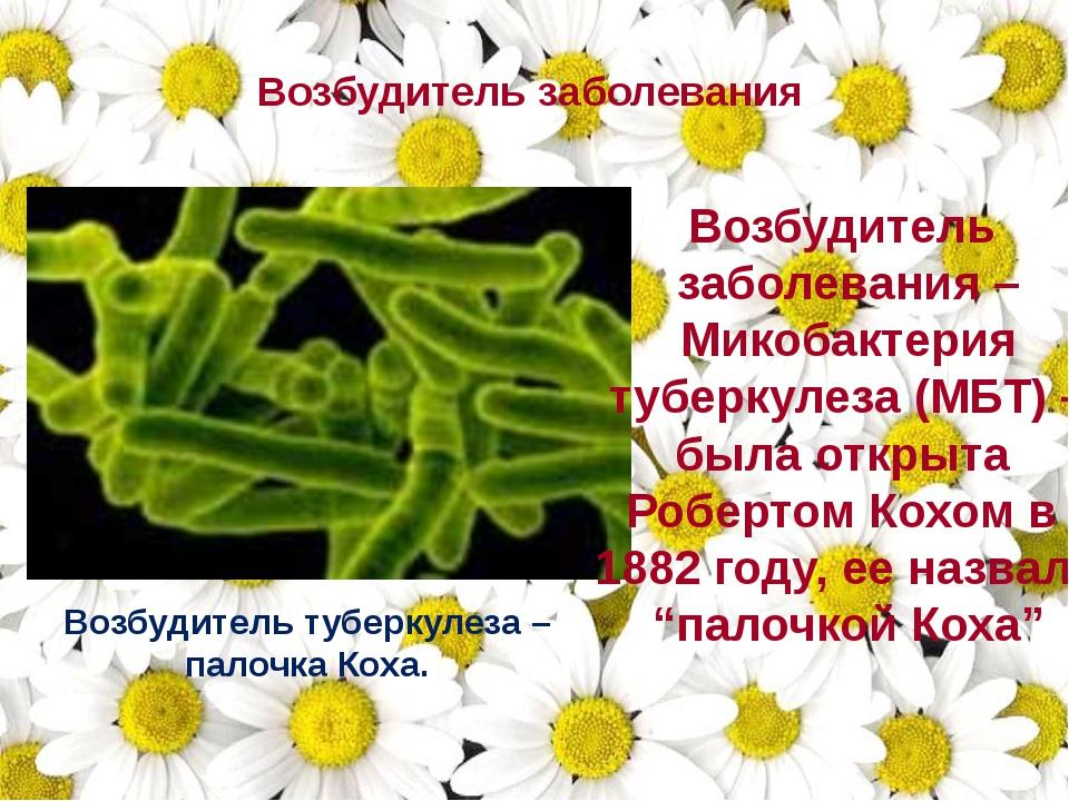Возбудитель заболевания Возбудитель туберкулеза – палочка Коха. Возбудитель з...
