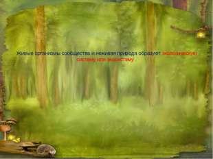Живые организмы сообщества и неживая природа образуют экологическую систему и