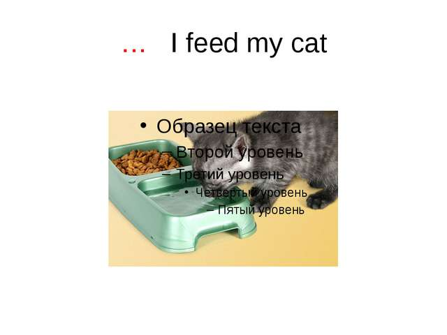 … I feed my cat