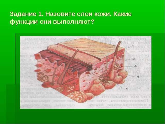 Задание 1. Назовите слои кожи. Какие функции они выполняют?