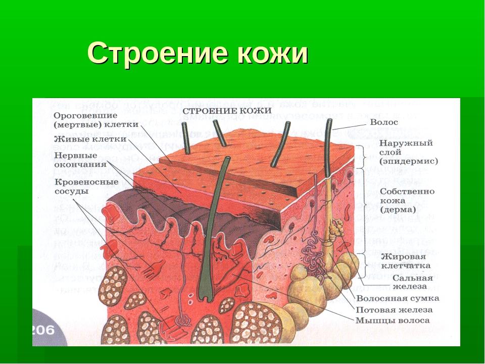 картинки на тему строение рыб