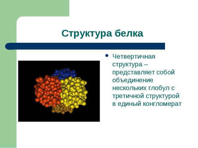Структура белка Четвертичная структура – представляет собой объединение неско...