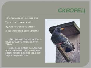 СКВОРЕЦ «Он прилетает каждый год Туда, где домик ждёт. Чужие песни петь умее