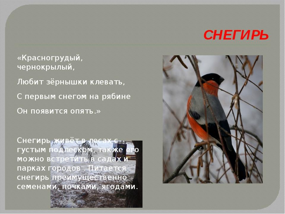СНЕГИРЬ «Красногрудый, чернокрылый, Любит зёрнышки клевать, С первым снегом...