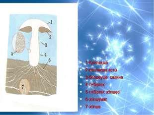1-Қалпақша 2-қалпақша асты 3-белдеуше сақина 4-түбіртек 5-түбіртек жіпшесі 6
