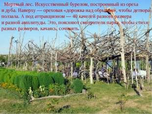 Мертвый лес. Искусственный бурелом, построенный изореха идуба. Наверху— о