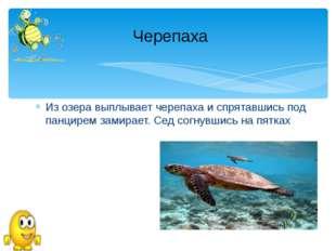 Из озера выплывает черепаха и спрятавшись под панцирем замирает. Сед согнувши