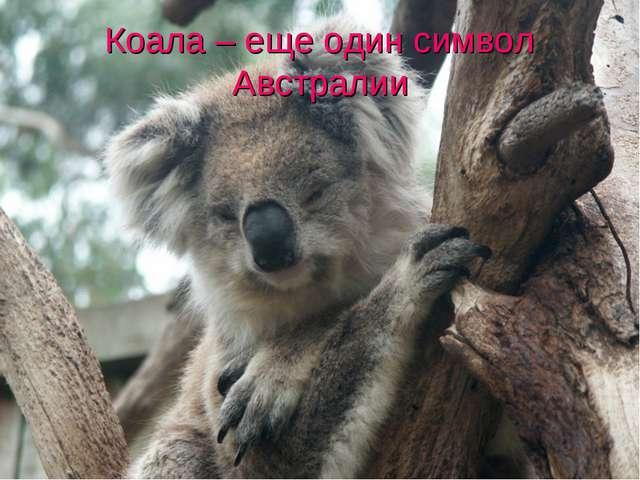 Коала – еще один символ Австралии
