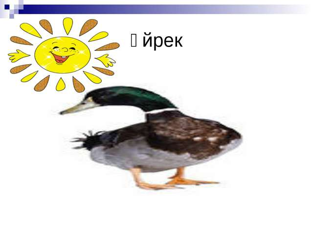 Үйрек