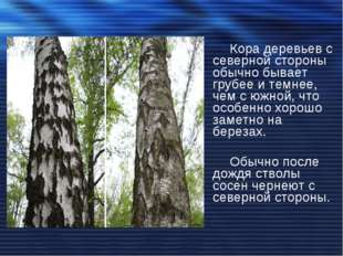 Кора деревьев с северной стороны обычно бывает грубее и темнее, чем с южной,