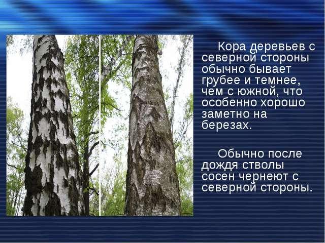Кора деревьев с северной стороны обычно бывает грубее и темнее, чем с южной,...