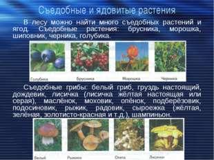 Съедобные и ядовитые растения В лесу можно найти много съедобных растений и я
