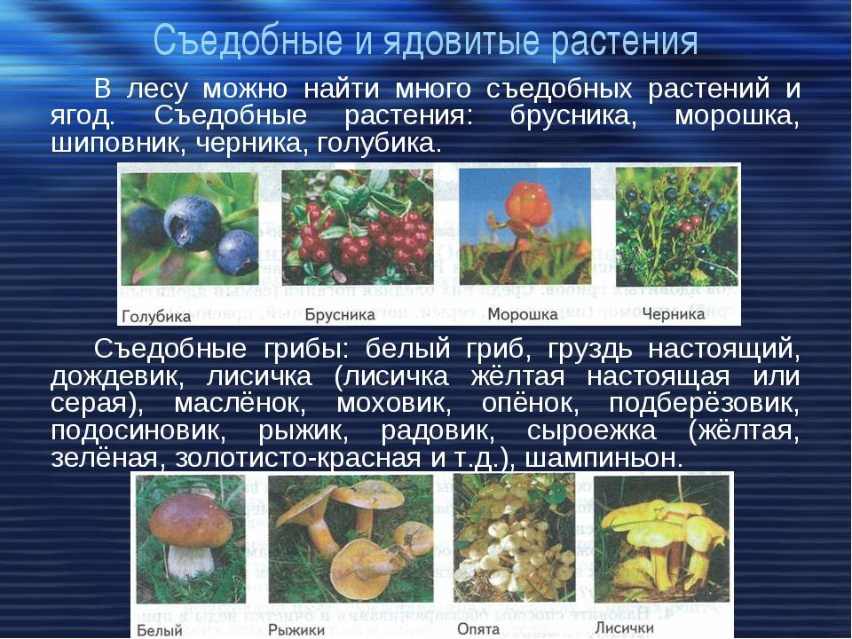 Съедобные и ядовитые растения В лесу можно найти много съедобных растений и я...