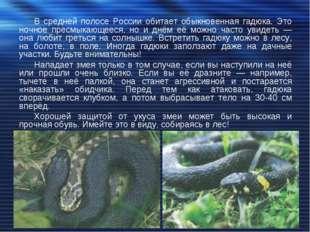 В средней полосе России обитает обыкновенная гадюка. Это ночное пресмыкающеес