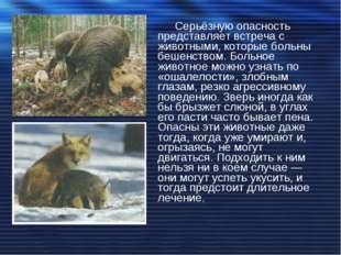 Серьёзную опасность представляет встреча с животными, которые больны бешенств