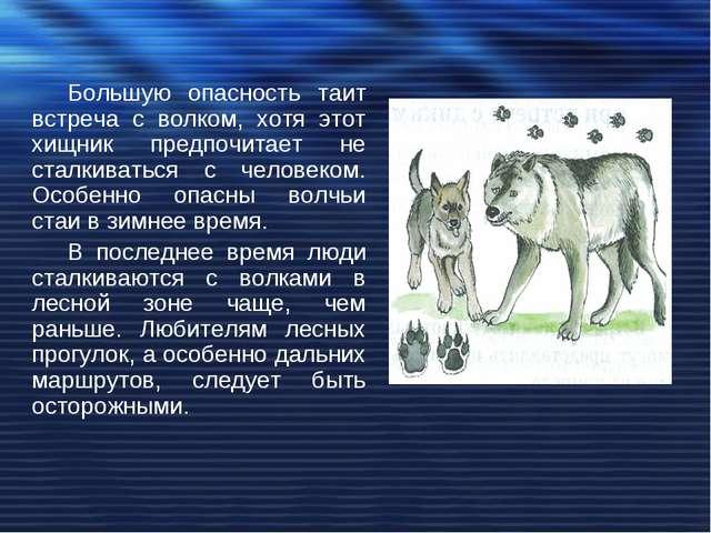Большую опасность таит встреча с волком, хотя этот хищник предпочитает не ста...