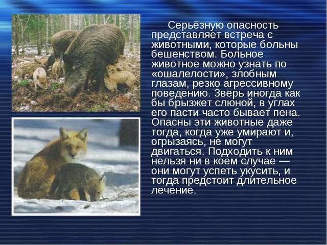 Серьёзную опасность представляет встреча с животными, которые больны бешенств...
