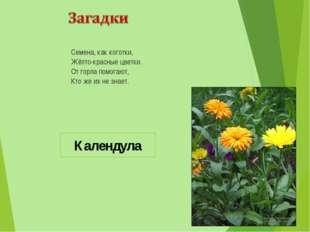 Семена, как коготки, Жёлто-красные цветки. От горла помогают, Кто же их не зн