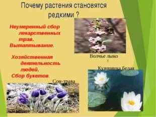 Почему растения становятся редкими ? Хозяйственная деятельность людей. Сбор б