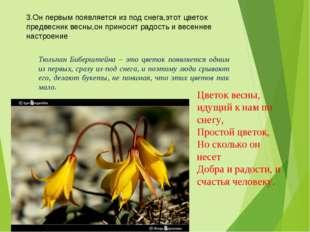 3.Он первым появляется из под снега,этот цветок предвесник весны,он приносит