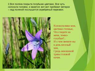 2.Вся поляна покрыта голубыми цветами. Все чуть склонили головки, и кажется:
