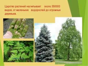 Царство растений насчитывает около 350000 видов, от маленьких водорослей до
