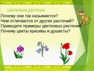 Цветковые растения Почему они так называются? Чем отличаются от других растен