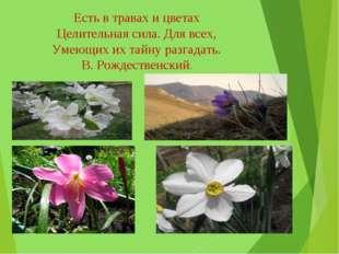 Есть в травах и цветах Целительная сила. Для всех, Умеющих их тайну разгадать