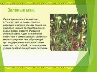 Зеленые мхи. Они встречаются повсеместно: произрастают на почве, стволах дере