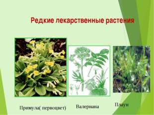 Редкие лекарственные растения. Примула( первоцвет) Валериана Плаун