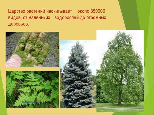 Царство растений насчитывает около 350000 видов, от маленьких водорослей до...
