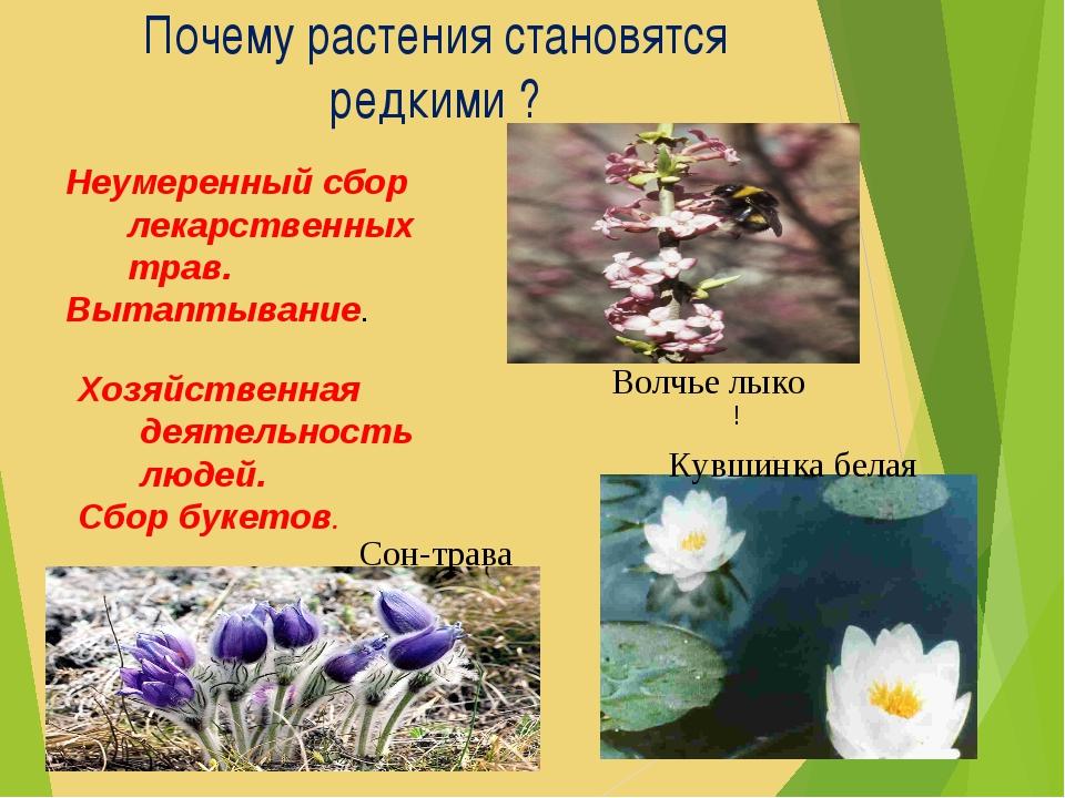 Почему растения становятся редкими ? Хозяйственная деятельность людей. Сбор б...