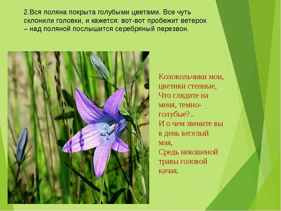 2.Вся поляна покрыта голубыми цветами. Все чуть склонили головки, и кажется:...