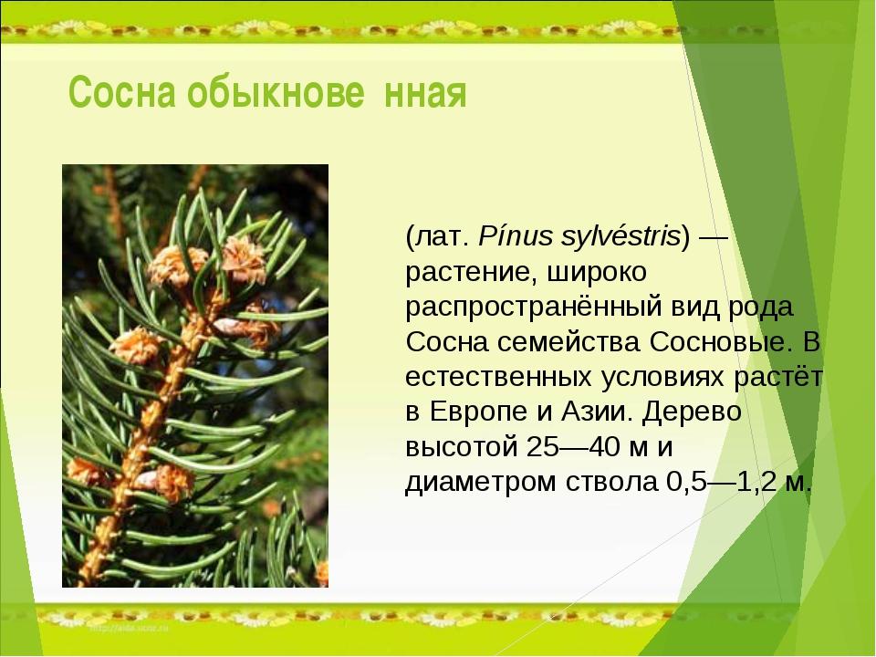 Сосна обыкнове́нная (лат.Pínus sylvéstris) — растение, широко распространённ...
