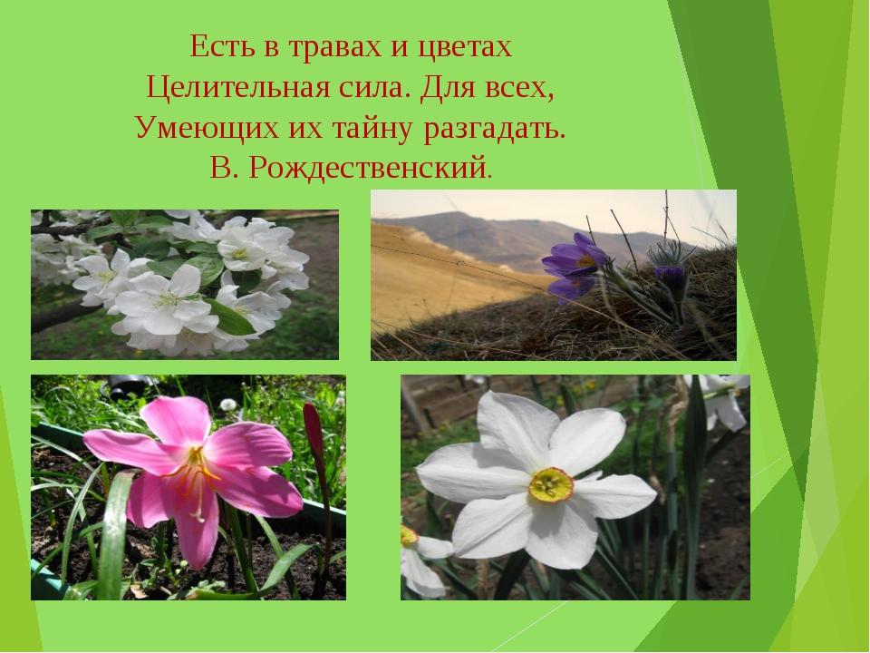 Есть в травах и цветах Целительная сила. Для всех, Умеющих их тайну разгадать...