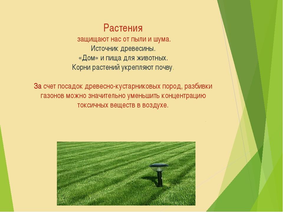 Растения защищают нас от пыли и шума. Источник древесины. «Дом» и пища для ж...