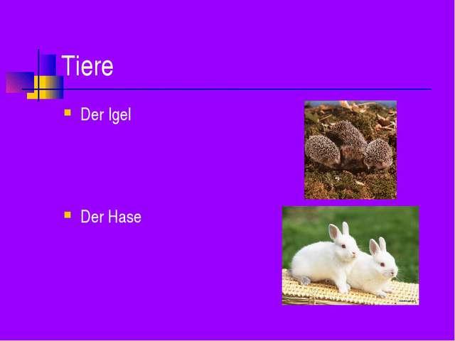 Tiere Der Igel Der Hase